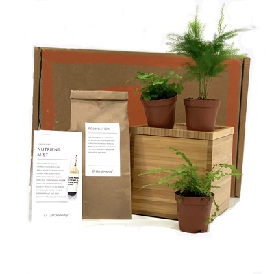Fern Garden in Bamboo Planter
