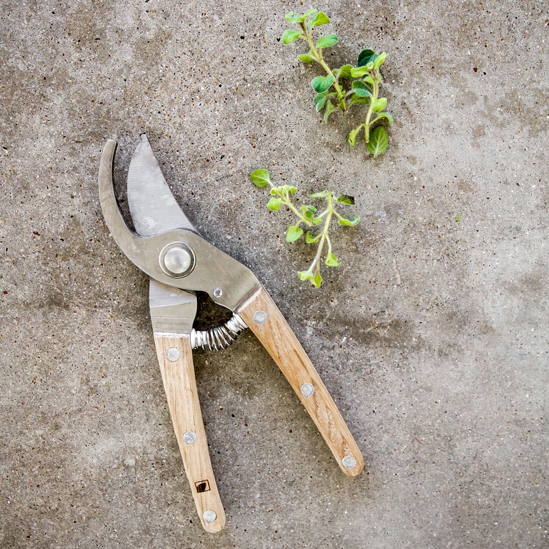 Patio to Table Pruners